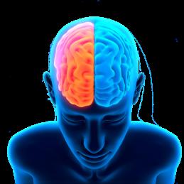 integratore naturale per migliorare l'apprendimento e la concentrazione